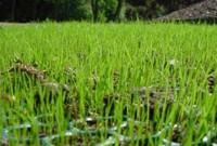 TurfProtecta Grass Mesh - close up